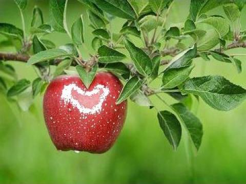 Pomi fructiferi de la Sc. Pominova Srl.