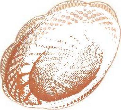 Cosuri plastic de la As Plastik Rom