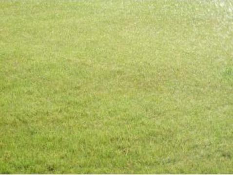 Gazon rulouri de la Garden Rustic Spatii Verzi
