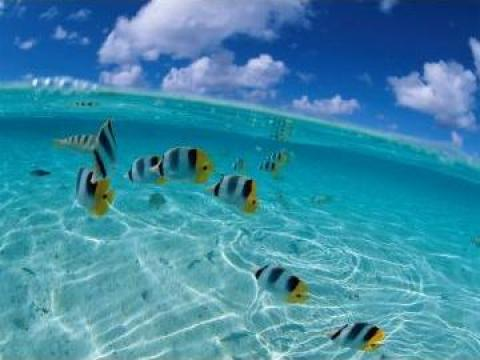 Produse de curatat pentru piscine, bazine inot