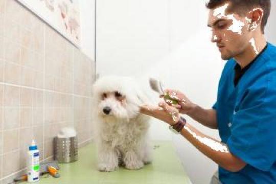 Cosmetica canina si felina