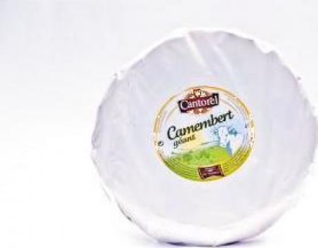 Branza Brie 1 kg Cantorel