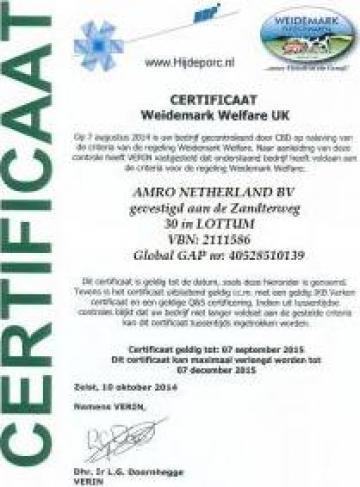 Carcasa de porc provenienta Olanda de la Amro Netherland Bv