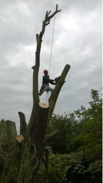 Toaletare copaci / arbori uscati sau periculosi de la A.u.r. Alpin Media Srl