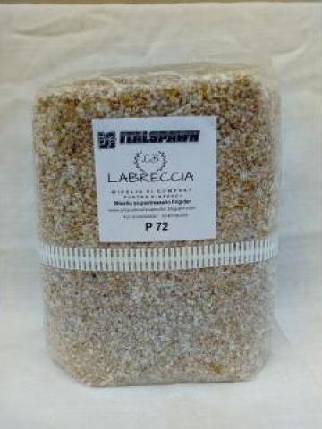 Miceliu (seminte) pentru pastrav de fag (pleurotus)