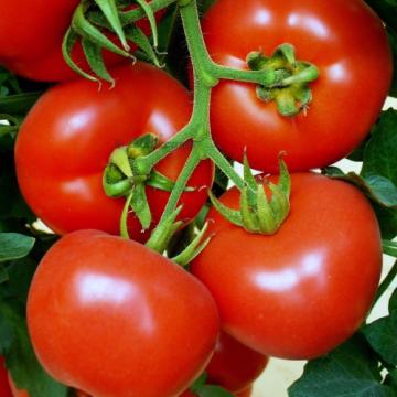 Seminte de tomate Klass 100 seminte de la Arbloom Srl