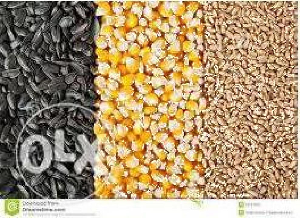 Cereale si plante oleaginoase